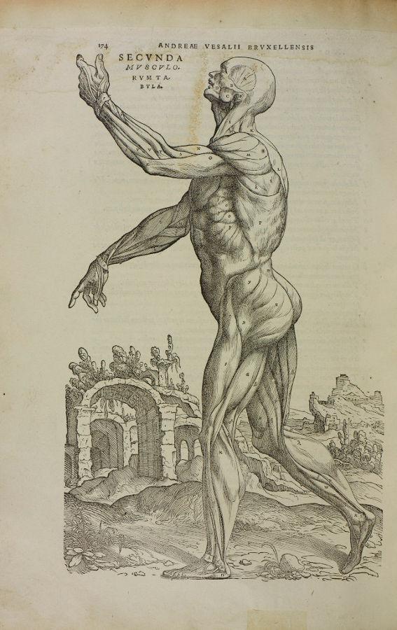 De Humani Corporis Fabrica, 1543